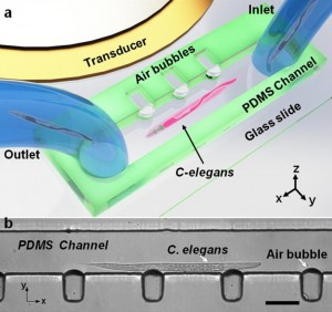Ultrasound Used to Rotate Biological Samples Within Microfluidic Devices